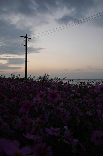 kosumos.jpg